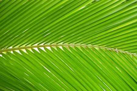 Abstract green coconut leaves background photo