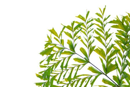 diagonale: Abstract green leaves on white background