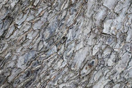 Closeup texture of wood skin. Stock Photo - 15733876