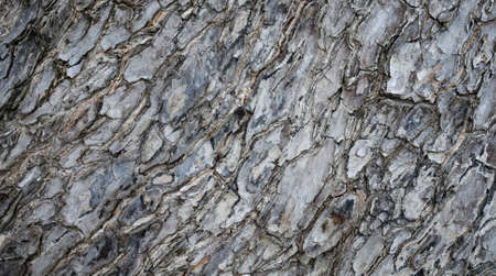 Closeup texture of wood skin. Stock Photo - 15791031