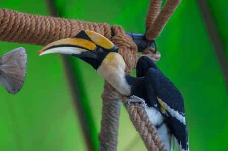 strikingly: A hornbill in the zoo.