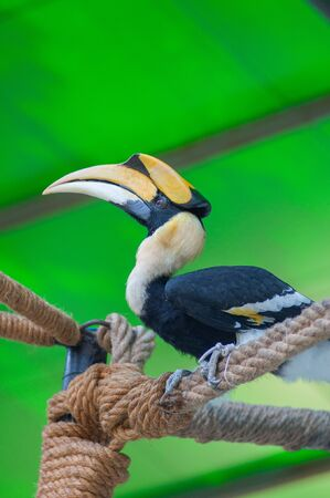 A hornbill in the zoo. Stock Photo - 17252330