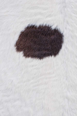 Close up of cow skin texture. photo