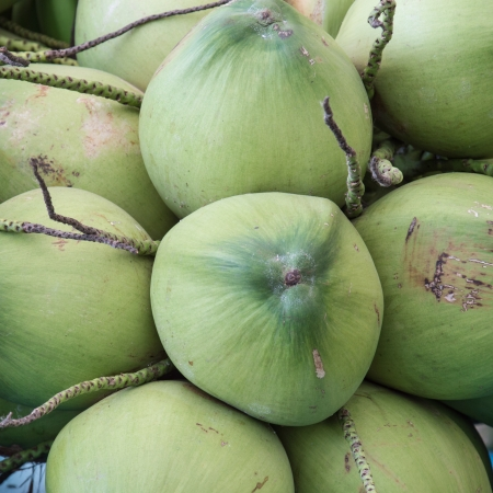Bunch of young coconuts. photo