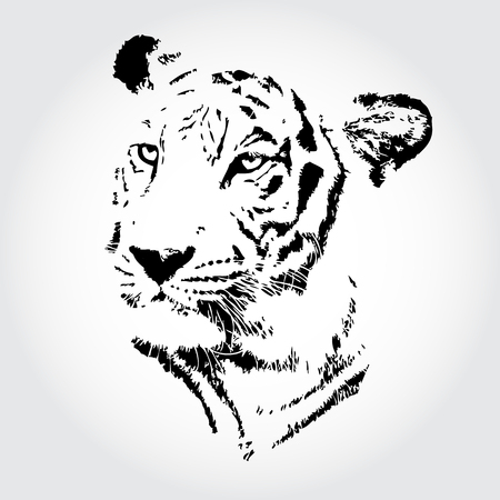 Tiger sketch isolated background. photo