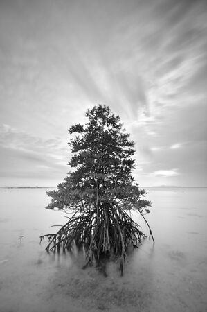 Long exposure seascape of mangrove tree. photo