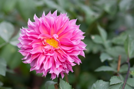 colorful flower photo