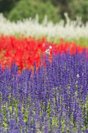 colorful flower garden photo