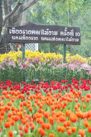colorful flower gaden. photo