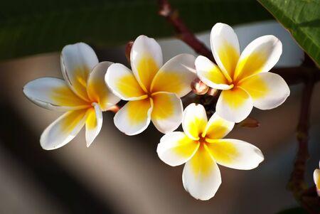 leelawadee: leelawadee in soft light nice composition