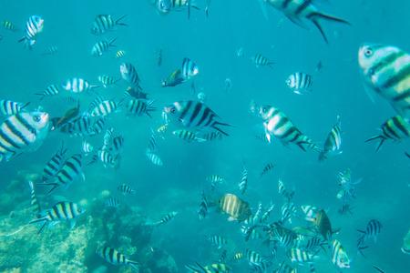 nangyuan: Under water view with common fish at ko nangyuan, Thailand.