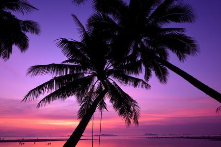 Ko samui, Thailand. Silhouette of coconut palm tree on the beach at twilight. Zdjęcie Seryjne