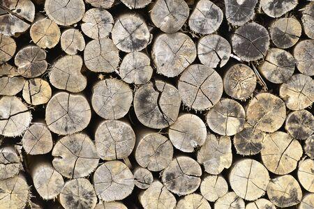 wood in fram Stock Photo - 17844838