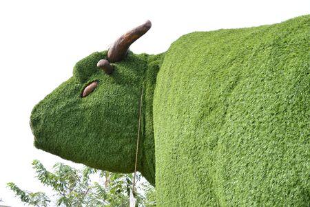 cow of tree Stock Photo - 17844835