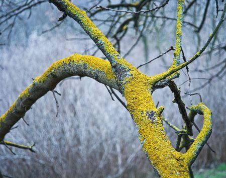 Yellow moss on a tree Stock Photo - 6953034