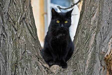 climbed: black cat climbed on a tree and looks around   Stock Photo