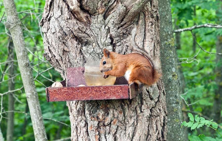 squirrel perched on a tree trunk eating a peanut photo