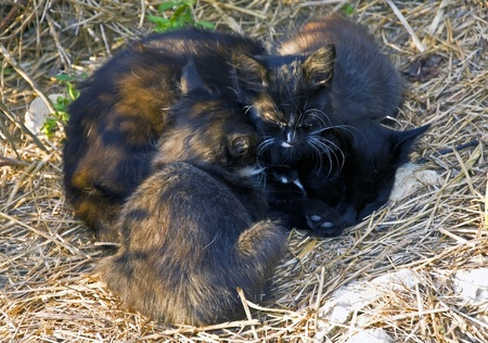 mammy: Cute kitten and his mother Stock Photo