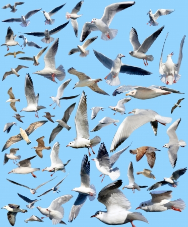 marine gulls on a blue background