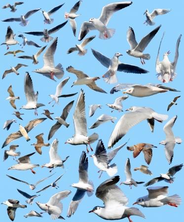 marine gulls on a blue background