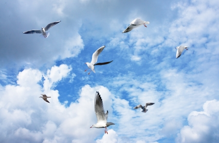 flying bird: Group of sea gulls against a blue sky with clouds Stock Photo