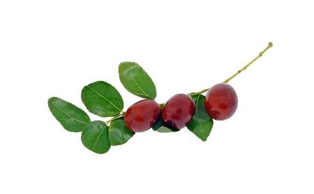 jujube fruits: jujube fruit (Ziziphus zizyphus ) on branch with leaves isolated on white background