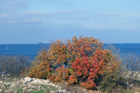 tree with yellow and red  leaves on a background blue sea photo