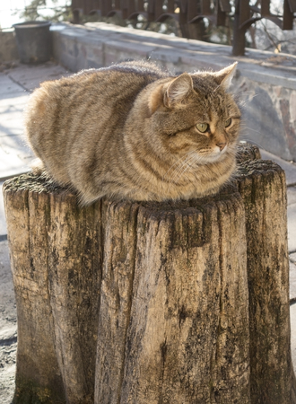 calico whiskers: cat has a rest on a hemp from a tree