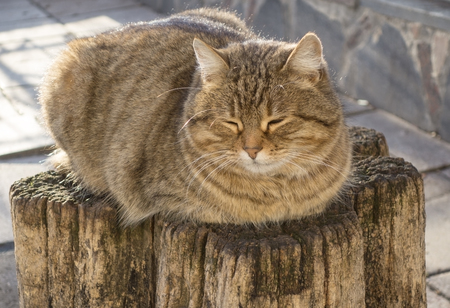 cat rest on a hemp from a tree photo