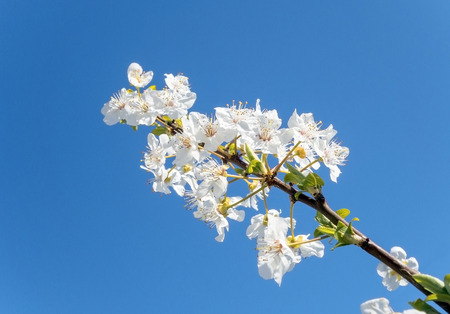 abloom: A beautiful flower on a tree in spring