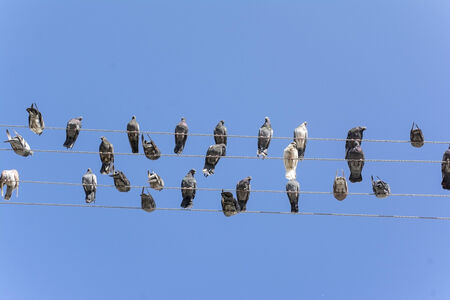 pigeons sit on wires on a background sky photo
