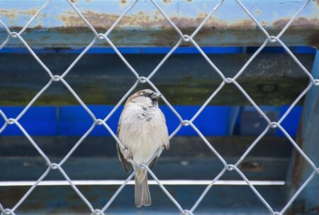 mesh fence: sparrow on wire mesh fence