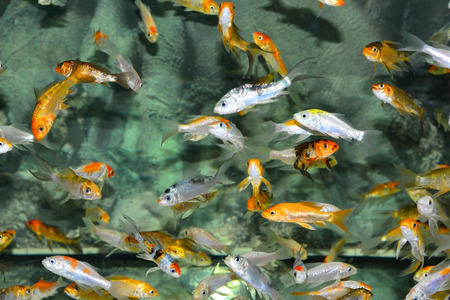 subsea: Exotic fishes in an Aquarium