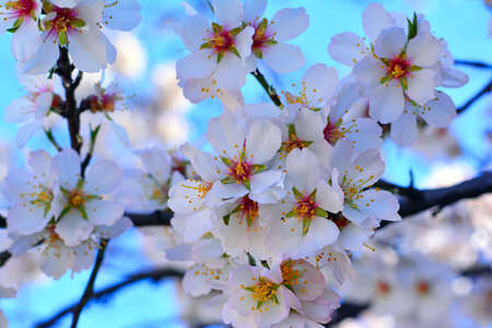 abloom: Spring flower on a tree on the sky background Stock Photo