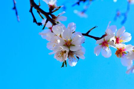 Spring flower on a tree on the sky background Stock Photo