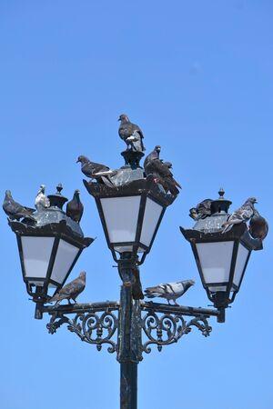 mess: Pigeons mess on streetlight against blue sky Stock Photo