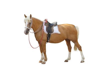 白い背景で隔離のサドルの下の馬