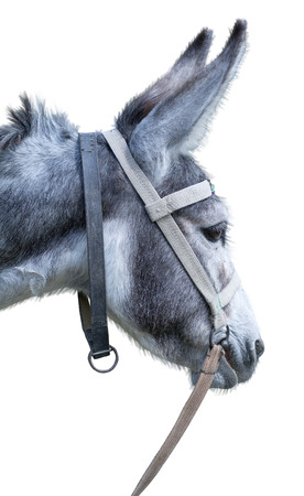 jack ass: Donkey isolated on the white background