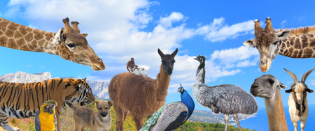 grouped: A group of animals are grouped together