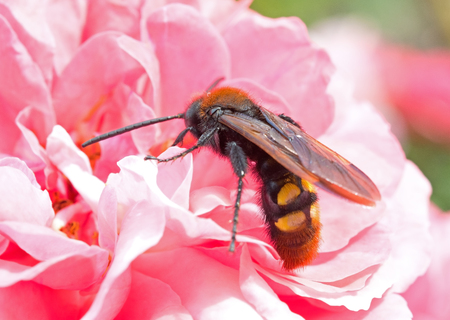 A large  beetles sits on a flower Stock Photo
