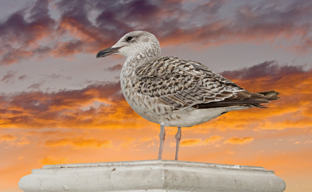 Marine gull on background blue sky