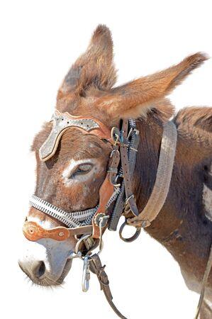 jack ass: Donkey isolated on the white background