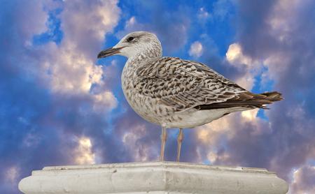 Marine gull on background blue sky
