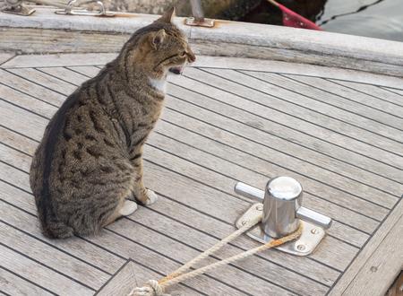 fishing boat and big marine cat