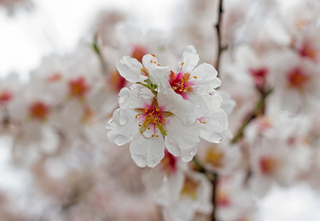 beautiful Spring flower on a tree