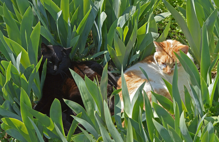 Two cats on rest in grass