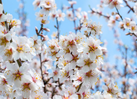 uncultivated: beautiful Spring flower on a tree