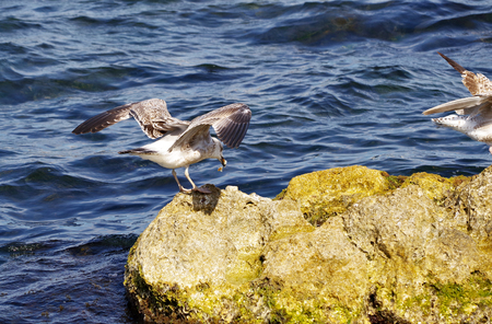 freely: the seagull on the wall Stock Photo