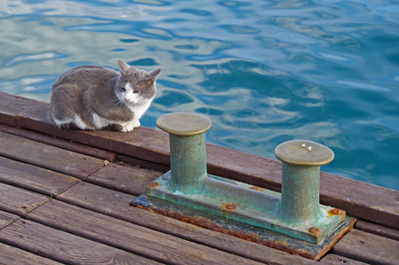Bollard on moorage and cat Stock Photo