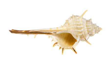 the sea shell on white background